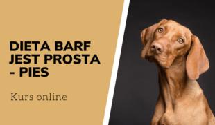 Dieta BARF jest prosta pies